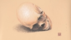 Colored pencil skull.